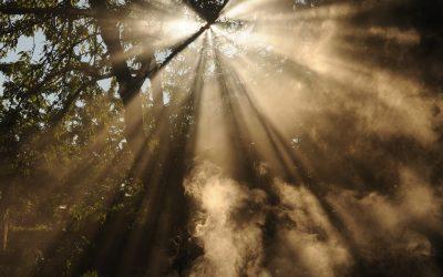 Heart Activation Affirmations Meditation